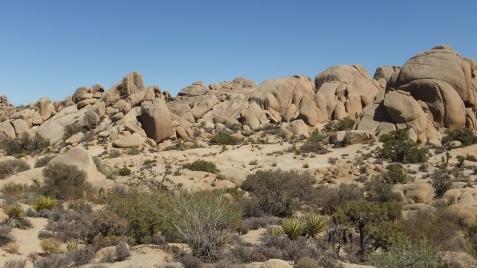 jumbo-rocks-joshua-tree-np-dscf4597