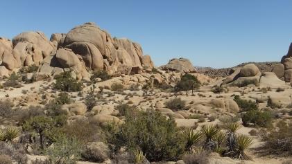 jumbo-rocks-joshua-tree-np-dscf4598