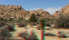 lost-mule-wall-joshua-tree-np-3da-1080p-dscf5783