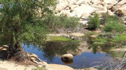 barker-dam-joshua-tree-np-dscf5563