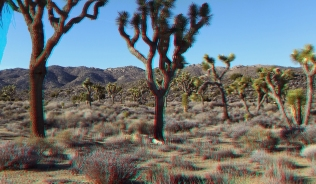 lost-horse-valley-joshua-tree-np-3da-1080p-dscf0477