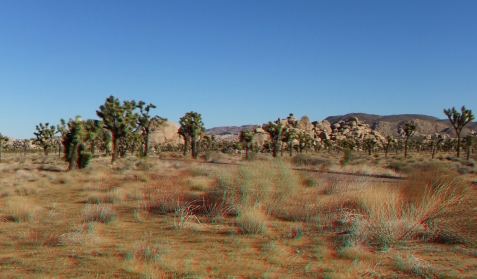 lost-horse-valley-joshua-tree-np-3da-1080p-dscf8487