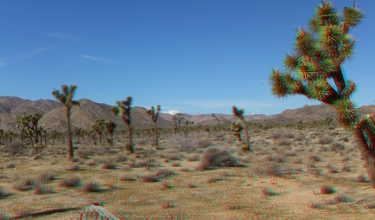 quail-springs-area-joshua-tree-3da-1080p-dscf5221