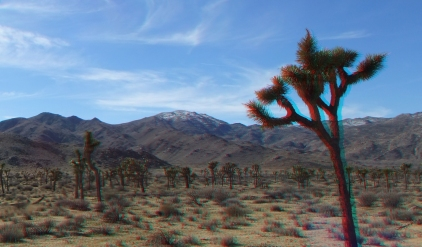quail-springs-area-joshua-tree-3da-1080p-dscf5222