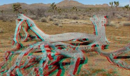 quail-springs-area-joshua-tree-3da-1080p-dscf5224
