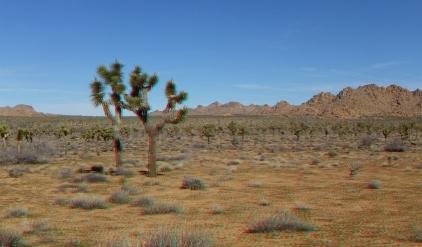 quail-springs-area-joshua-tree-3da-1080p-dscf5229