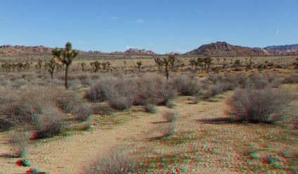 quail-springs-area-joshua-tree-3da-1080p-dscf5235