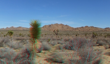 quail-springs-area-joshua-tree-3da-1080p-dscf5236