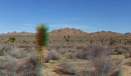 quail-springs-area-joshua-tree-3da-1080p-dscf5236