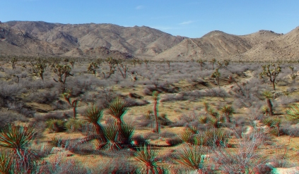 quail-springs-area-joshua-tree-3da-1080p-dscf5268