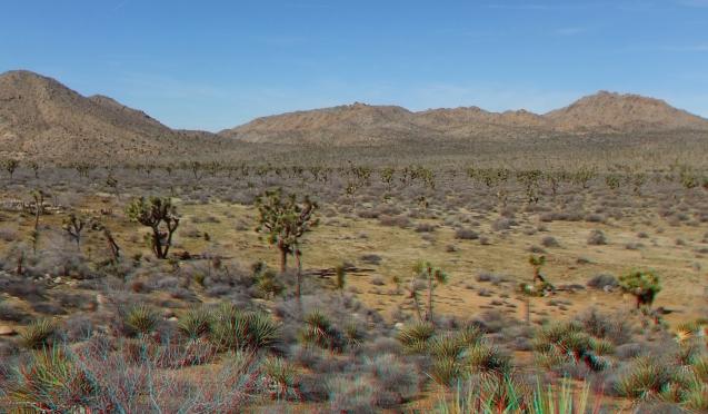quail-springs-area-joshua-tree-3da-1080p-dscf5273