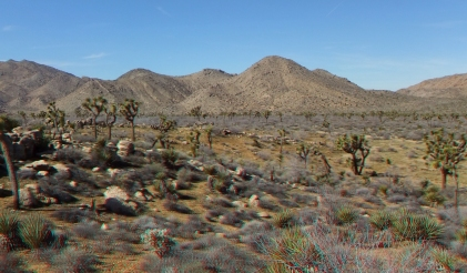 quail-springs-area-joshua-tree-3da-1080p-dscf5274