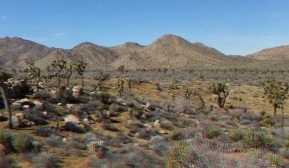 quail-springs-area-joshua-tree-3da-1080p-dscf5274