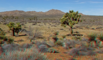 quail-springs-area-joshua-tree-3da-1080p-dscf5275