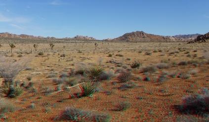 quail-springs-area-joshua-tree-3da-1080p-dscf5279