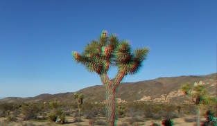 Campground Joshua Tree NP 1080p 3DA DSCF5722