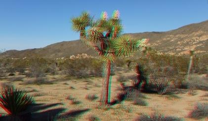Campground Joshua Tree NP 1080p 3DA DSCF5724