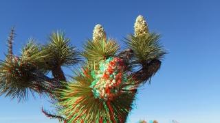 Campground Joshua Tree NP 1080p 3DA DSCF5727