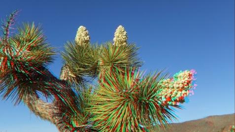 Campground Joshua Tree NP 1080p 3DA DSCF5733
