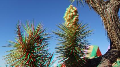 Campground Joshua Tree NP 1080p 3DA DSCF5772