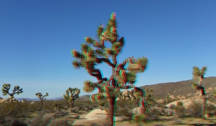 Campground Joshua Tree NP 1080p 3DA DSCF5776