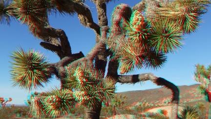 Campground Joshua Tree NP 1080p 3DA DSCF5777