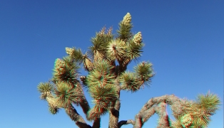 Campground Joshua Tree NP 1080p 3DA DSCF5778