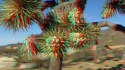 Campground Joshua Tree NP 1080p 3DA DSCF5779