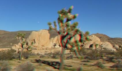 Campground Joshua Tree NP 1080p 3DA DSCF5787