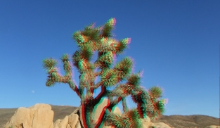 Campground Joshua Tree NP 1080p 3DA DSCF5788
