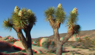 Campground Joshua Tree NP 1080p 3DA DSCF5802