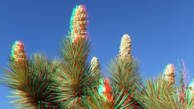 Campground Joshua Tree NP 1080p 3DA DSCF5808