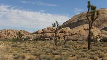echo-rock-area-joshua-tree-np-dscf5408