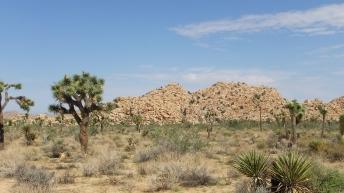 echo-rock-area-joshua-tree-np-dscf5410