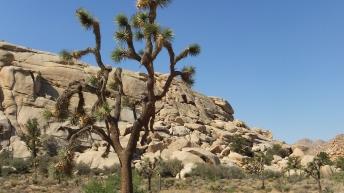 echo-rock-area-joshua-tree-np-dscf5413
