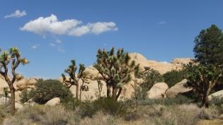 echo-rock-area-joshua-tree-np-dscf5964