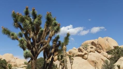 echo-rock-area-joshua-tree-np-dscf5966