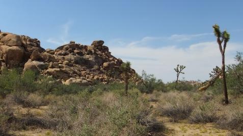 echo-rock-area-joshua-tree-np-dscf5969