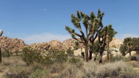 echo-rock-area-joshua-tree-np-dscf5970