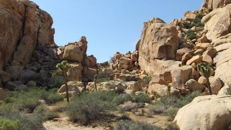 echo-rock-area-joshua-tree-np-dscf5973