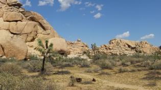 echo-rock-area-joshua-tree-np-dscf5978