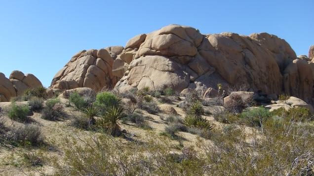 Jumbo Rocks Corridor Joshua Tree NP DSCF5600