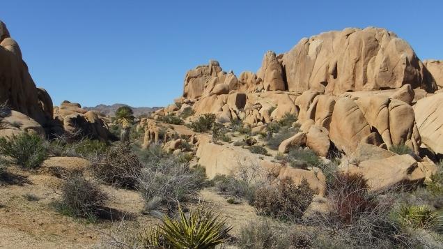 Jumbo Rocks Corridor Joshua Tree NP DSCF5608