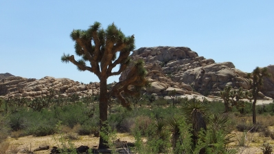 piano-valley-joshua-tree-np-dscf5736