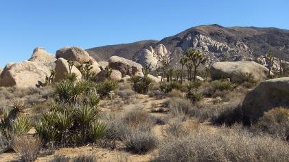Planet X boulders Joshua Tree NP DSCF7199