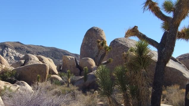 Planet X boulders Joshua Tree NP DSCF7208