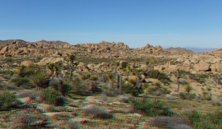 Zebra Cliffs Joshua Tree NP 1080p 3DA DSCF5681