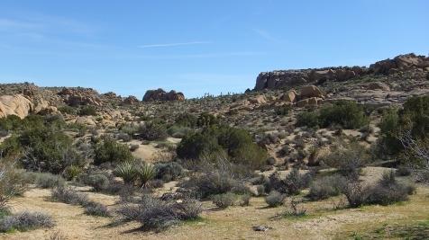 Zebra Cliffs Joshua Tree NP DSCF5652