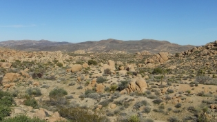 Zebra Cliffs Joshua Tree NP DSCF5679