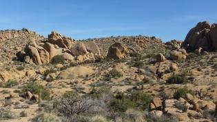 Zebra Cliffs Joshua Tree NP DSCF5687